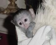 РЕБЕНОК / женщина обезьяна капуцин ДЛЯ ПРИНЯТИЯ